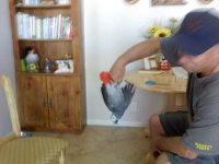 kokopeli-african-grey-parrot-1x
